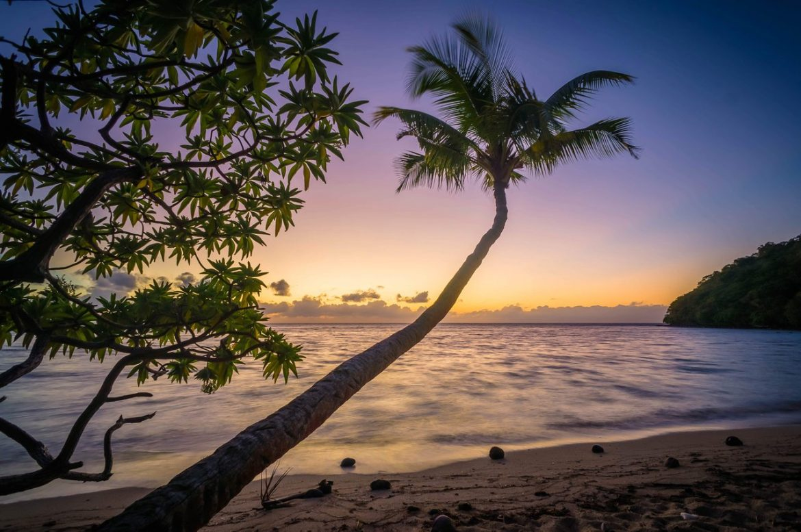 beach palm trees sunset